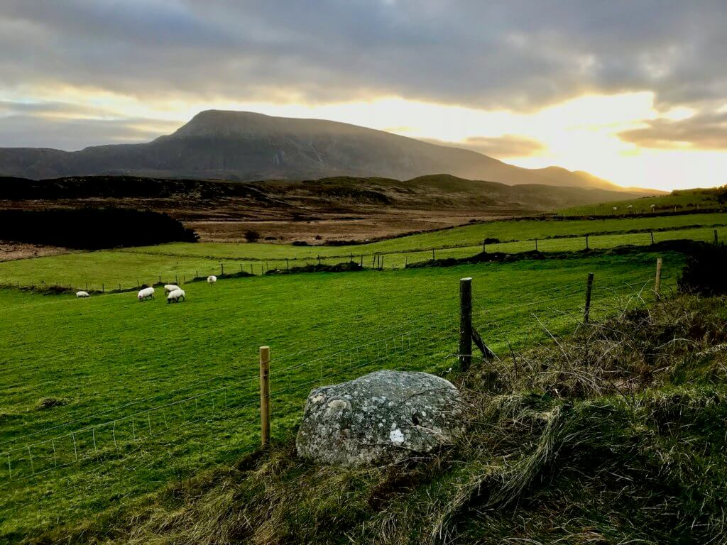 The buttery glow of a winter sunset begins to take over the gray cloudy sky behind the prominent rise of Muckish Mountain.  In the foreground is abundant peat bogs and rolling hills of green pastures with sheep grazing.  The is a typical landscape in Donegal, in northwest Ireland.