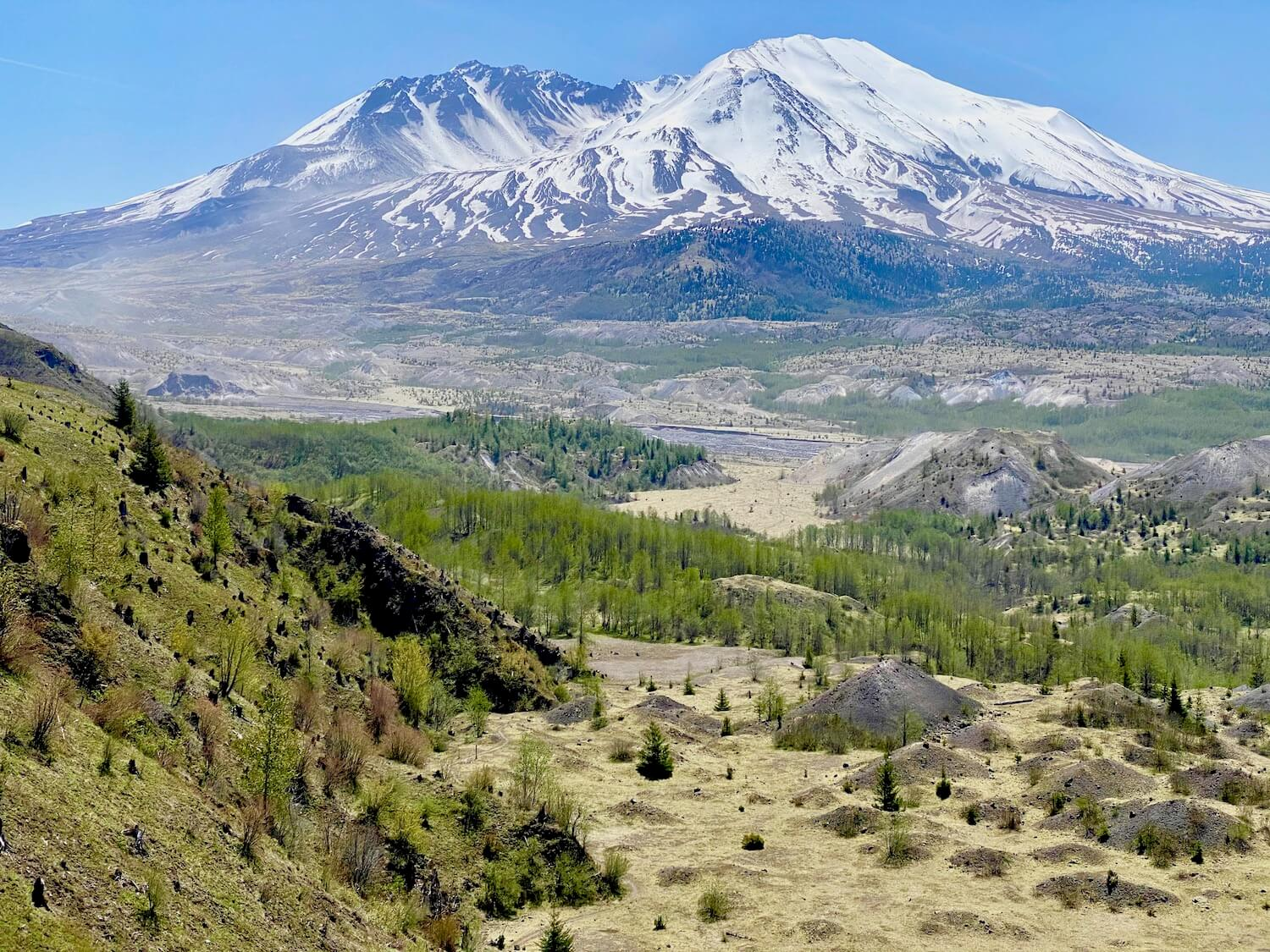 A view of Mt. St. Helens from the Hummocks hiking trail leading to the Loowit Viewpoint.  The mountain is covered with white snow which pops against the blue sky in the background.  The foreground has a steep hill of green brush and ground covers with a flat lowland area with a few bumps of gray ash piles.