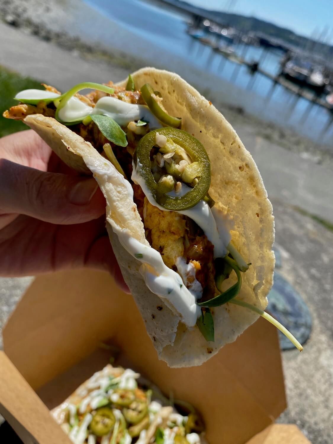 Yummy spicy breakfast tacos from Dad's Diner in Anacortes, Washington serve up some goodness.  This taco is held by a hand and features a ripe jalepeno cross section amongst eggs and white cream sauce.