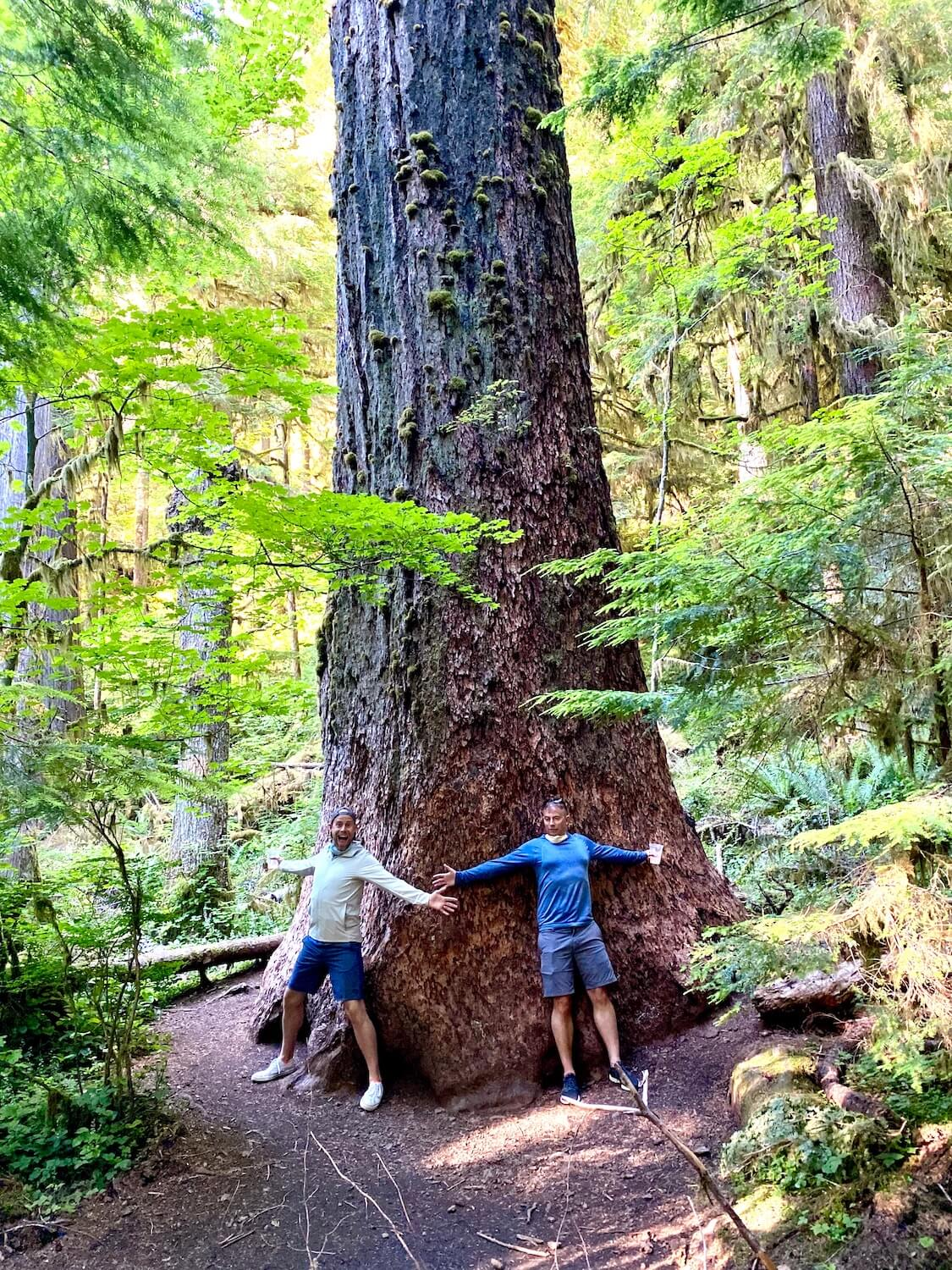Two men stand arm to arm around a giant old growth Douglas fir tree in the forest surrounding Lake Crescent Lodge. The access to nature in the this part of the Olympic National Park is inspiring. The giant tree trunk is surrounded by lower level maple trees.