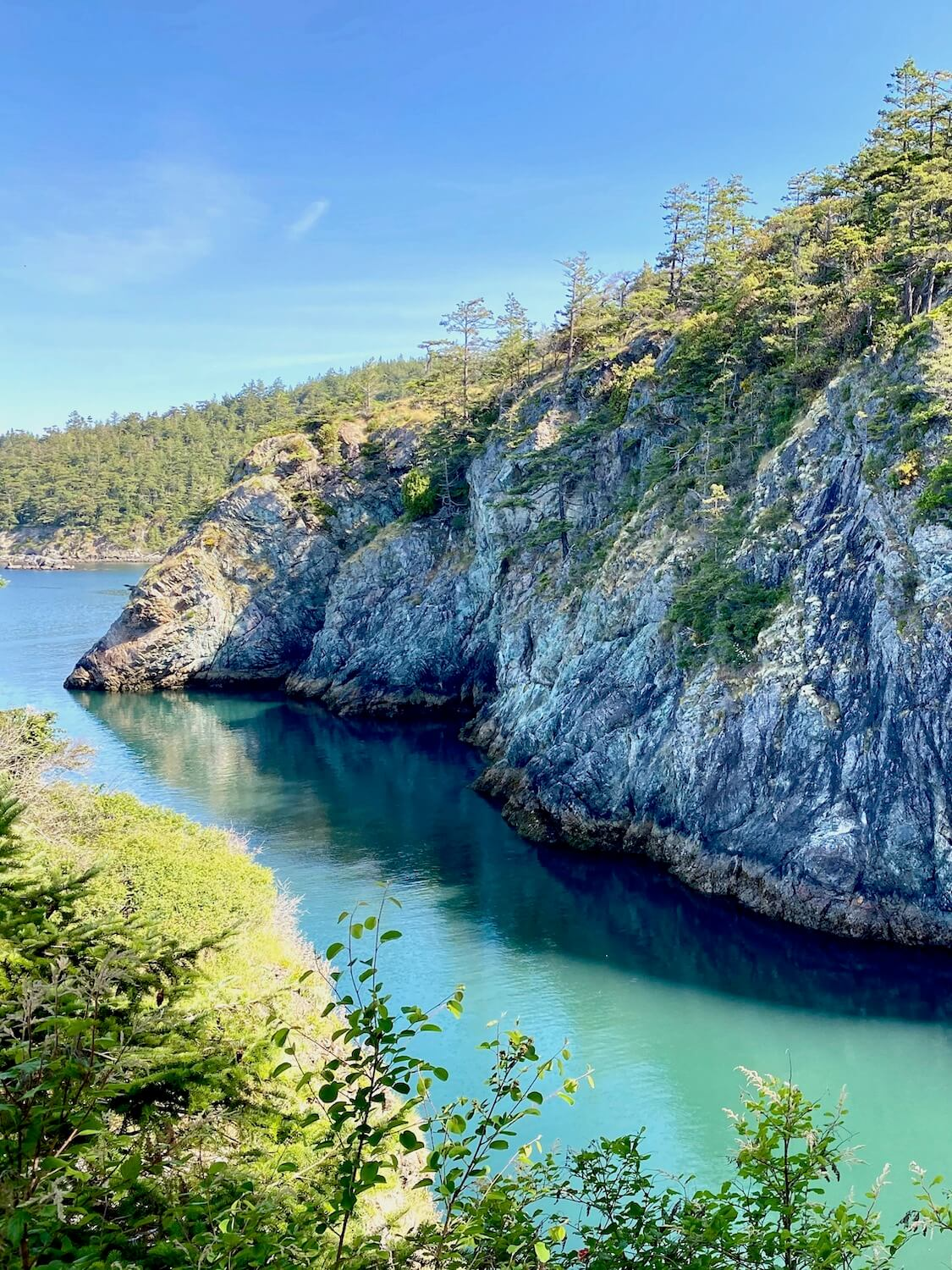 A day trip from Seattle to the dramatic coastlines of Deception Pass and Anacortes will provide stunning views like this. A high stone faced cliff rises from bright green saltwater quietly resting in the sea below. There are small fir trees at the top of the cliff leading to a blue sky above. The cliff casts a slight dark shadow over the water and in the foreground small shrubs pop their heads up.