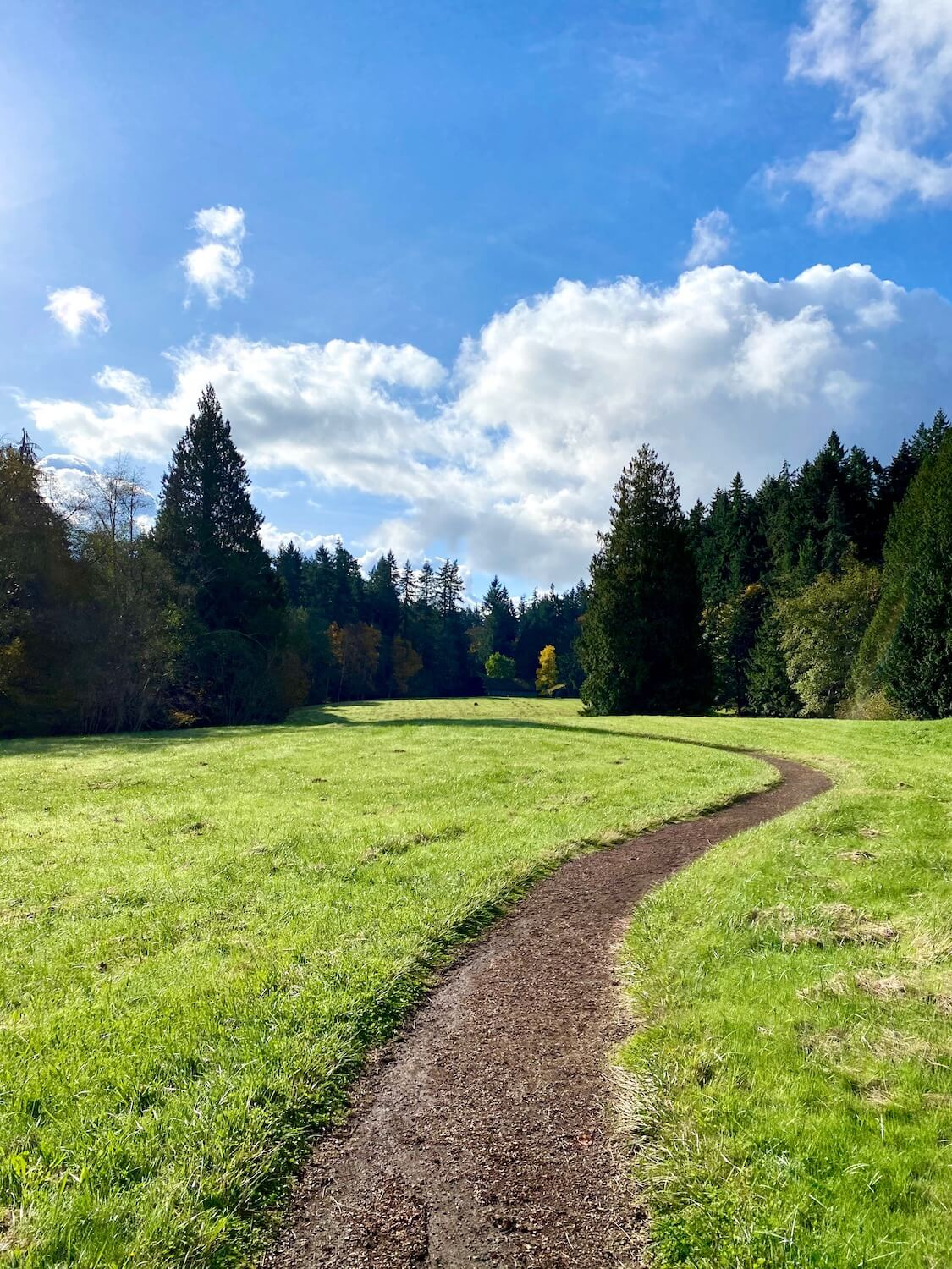 A winding path of brown wood chips meanders from the start of this photo into the distance through a green grassy meadow which is framed in by evergreen trees under blue sky.