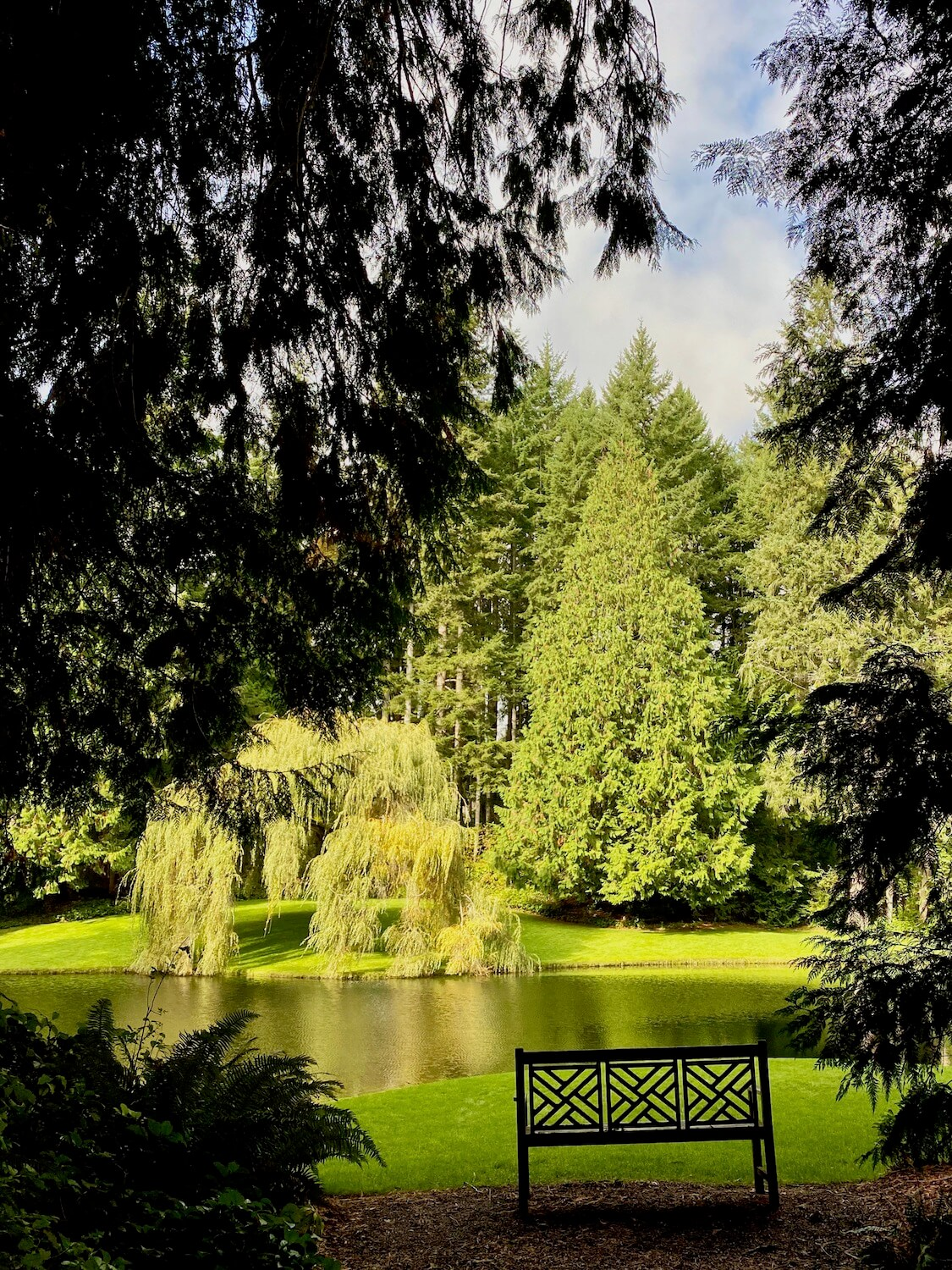 A bench with wooden patchwork design sits on a area of brown wood chips and looks out toward a quiet greenish lake with a willow tree flowing into the water on the other side of the lake. There are evergreen trees all around this scene.
