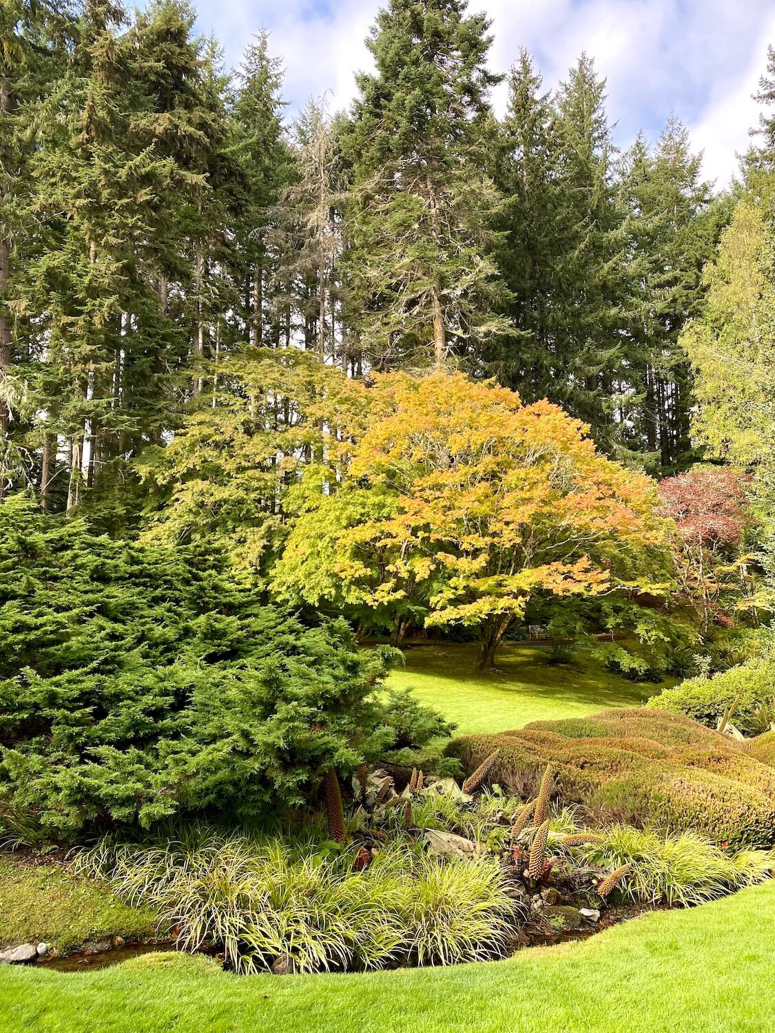 A collage of foliage follows a tiny brook amongst a green lawn and large fir trees in the backdrop under blue skies with patches of white clouds.