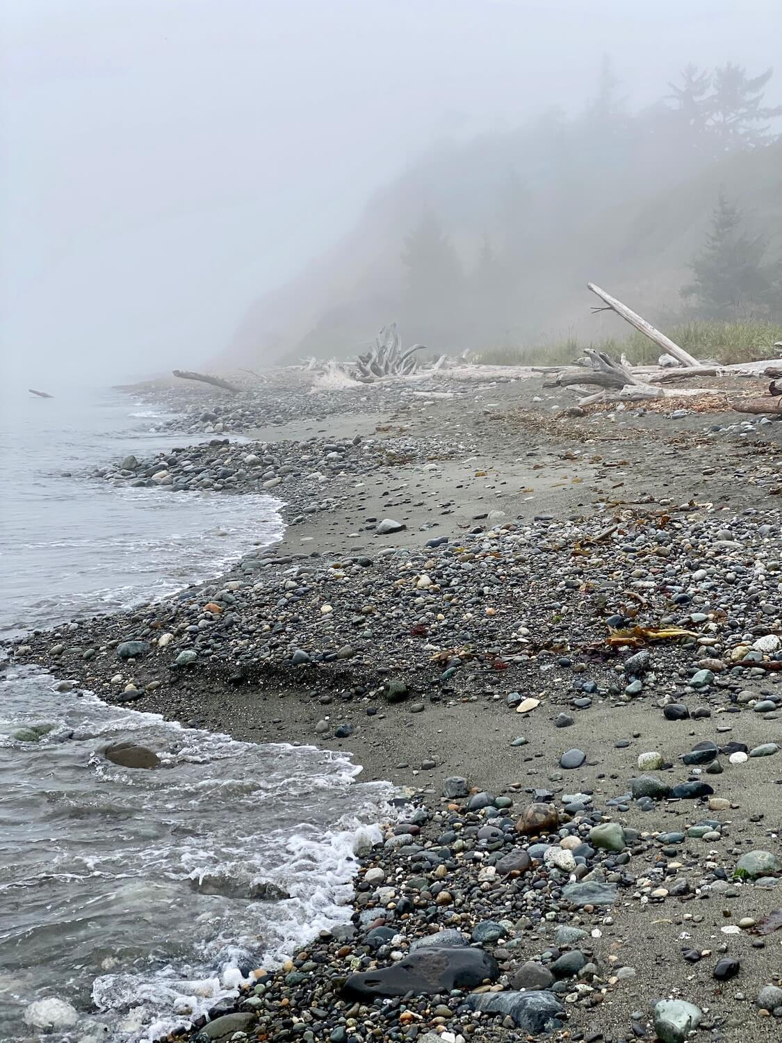 This beach scene shows Puget Sound saltwater waves gently washing onto a pebbly beach with sand mixed with rocks that lead up to several dramatic driftwood logs. The fog is thick and partly hides the layers of coastal fir trees.