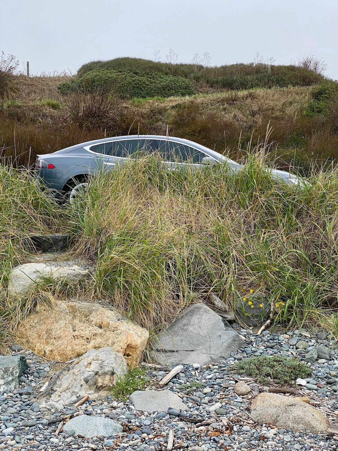 A Tesla S Series vehicle hides behind some green and yellow sea grass, only partially revealing the electric vehicle parked along side the road.