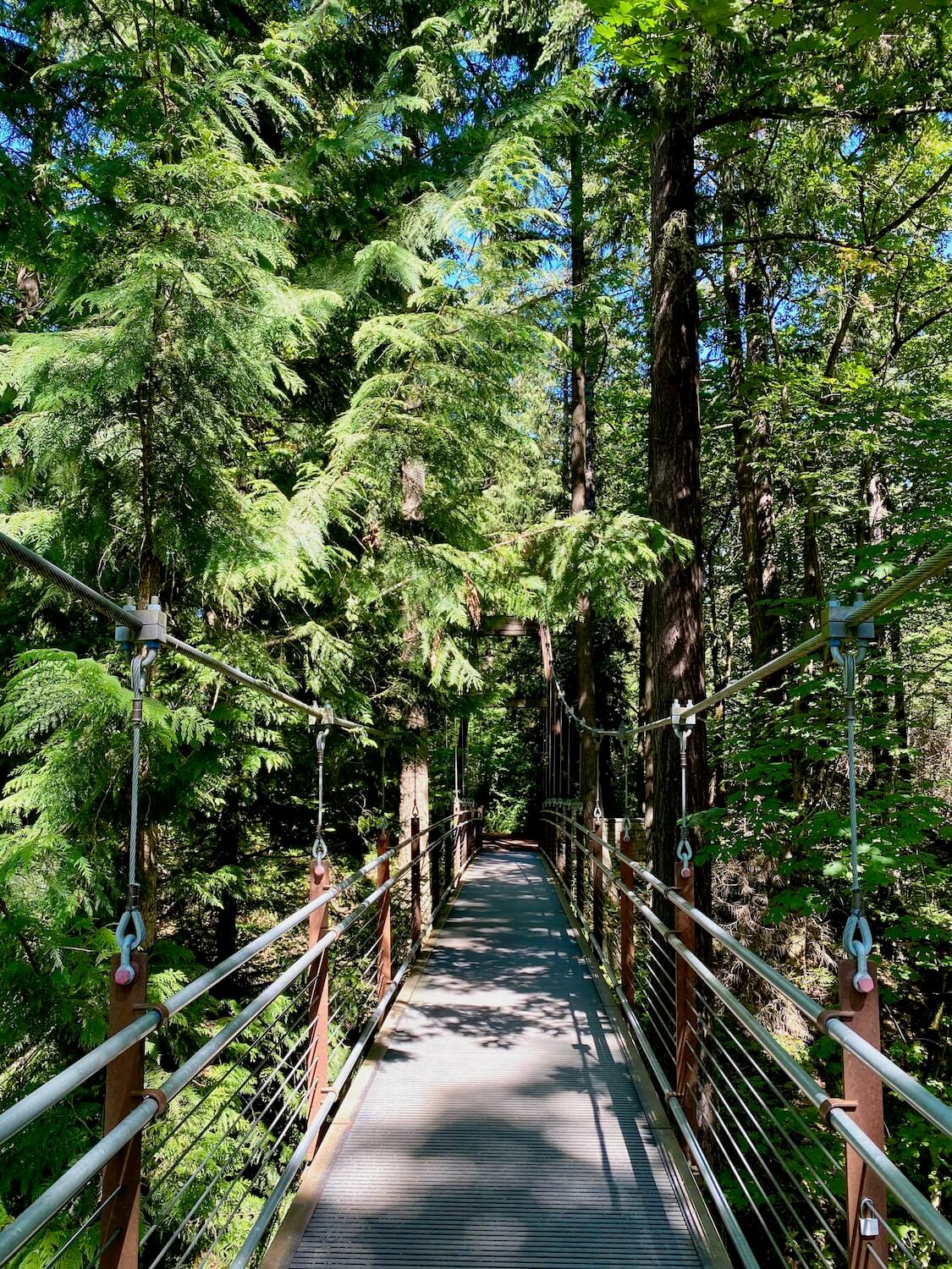 The suspension bridge at Bellevue Botanical Garden is a great park. The thick cables are connected to railings that hold the engineering contraption up under green leafy cedar and fir trees.