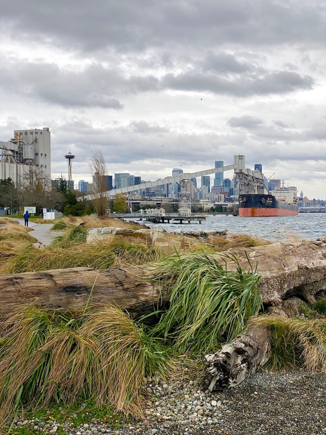 Elliott Bay Trail is a great outdoor winter thing to do in Seattle because there is so much to see. The space needle rises in the skyline of Seattle while a grain elevator pushes grain to a ship in the harbor. In the foreground a person walks on a concrete path that is surrounded by tall shoreline grasses, large rocks and a fallen tree.