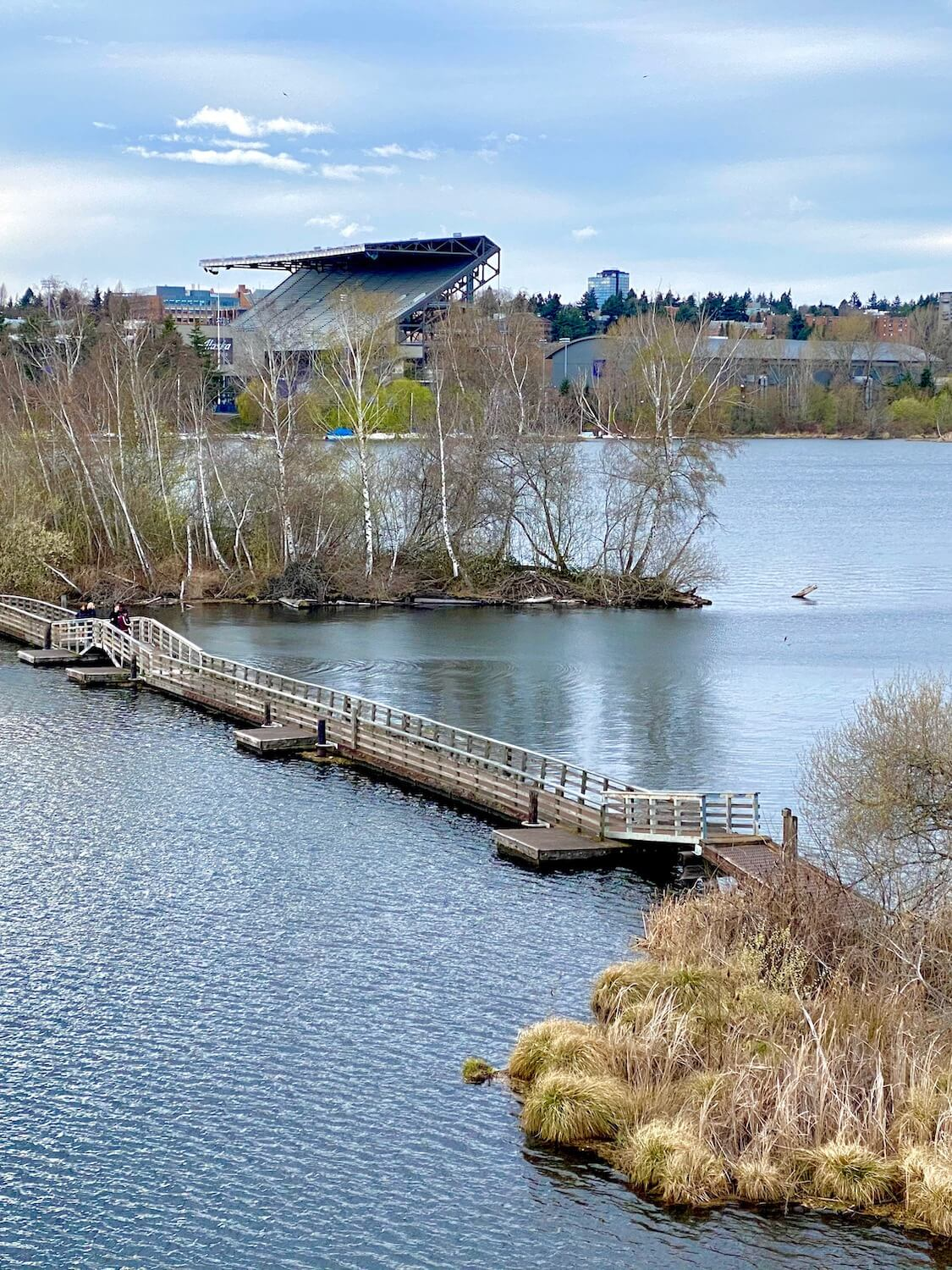 The floating plank system of this waterfront trail makes for a great Spring outdoor activity in Seattle because the textures of leafless trees in the background contrast the rich water with tiny waves.  The UW Husky Stadium rises in the background and two people walk over an arched bridge on the floating system of wood railings and concrete paths.