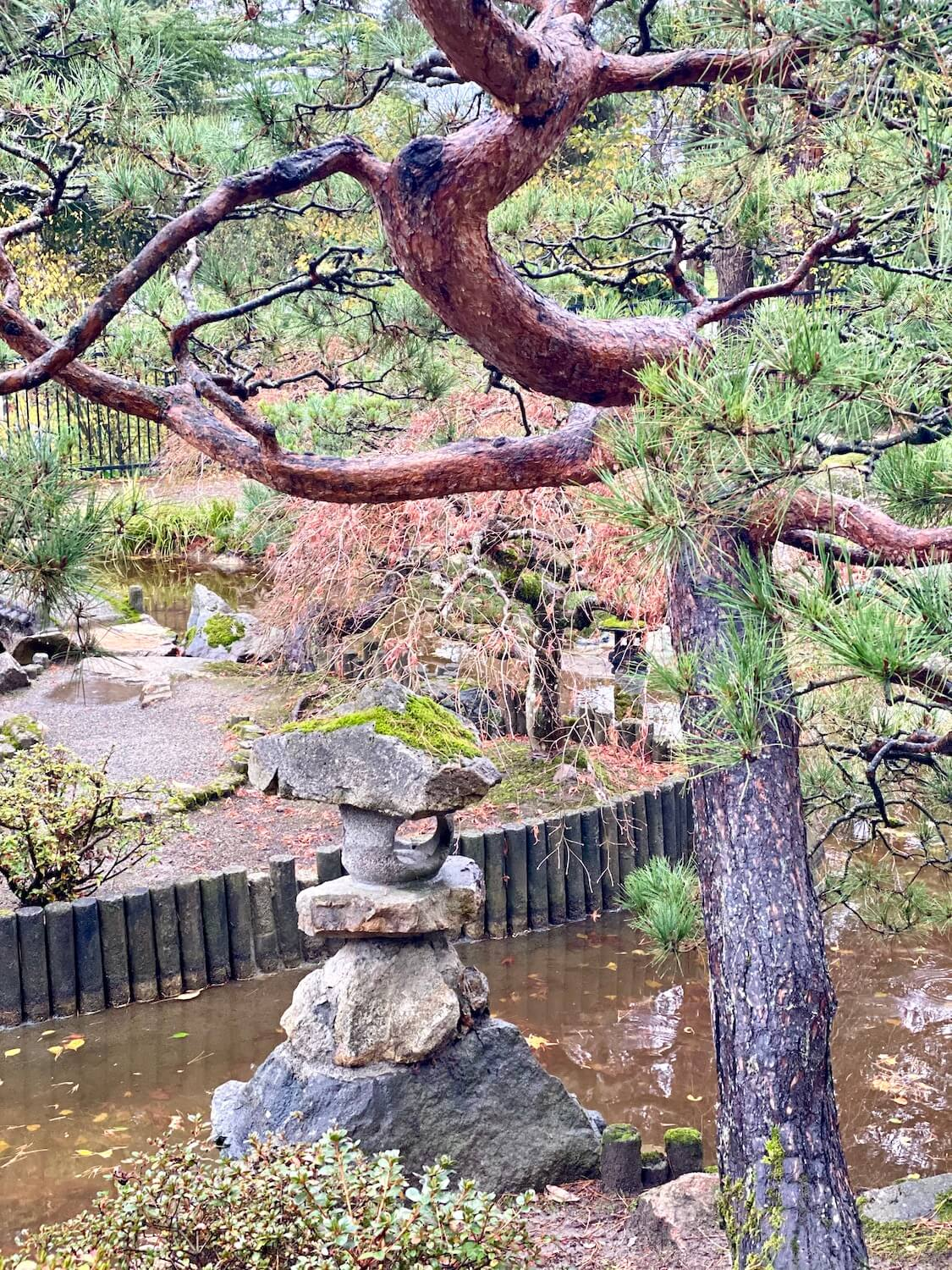 The Japanese Garden at Highline Botanical garden in Seattle showcases a variety of lanterns carved from stone, while an asian pine tree hangs over.