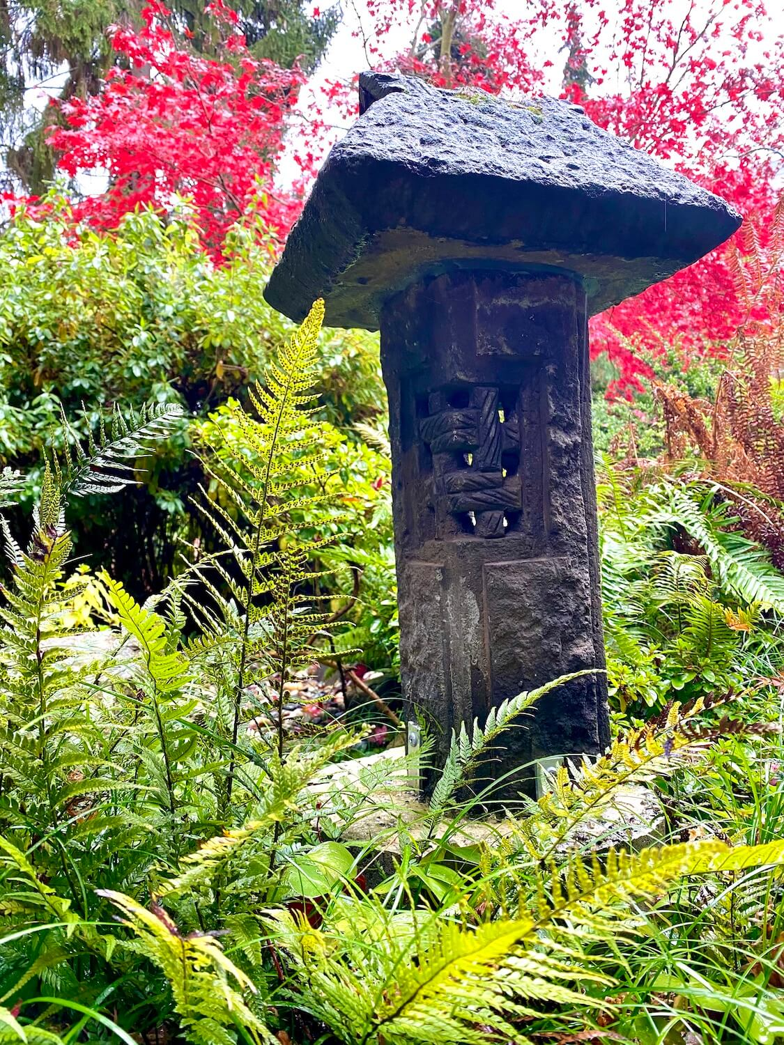 The Japanese tea garden at Seattle Univeristy is subtle and tiny but showcases this lantern carved from stone which is surrounded by bright red maple leaves and green ferns.