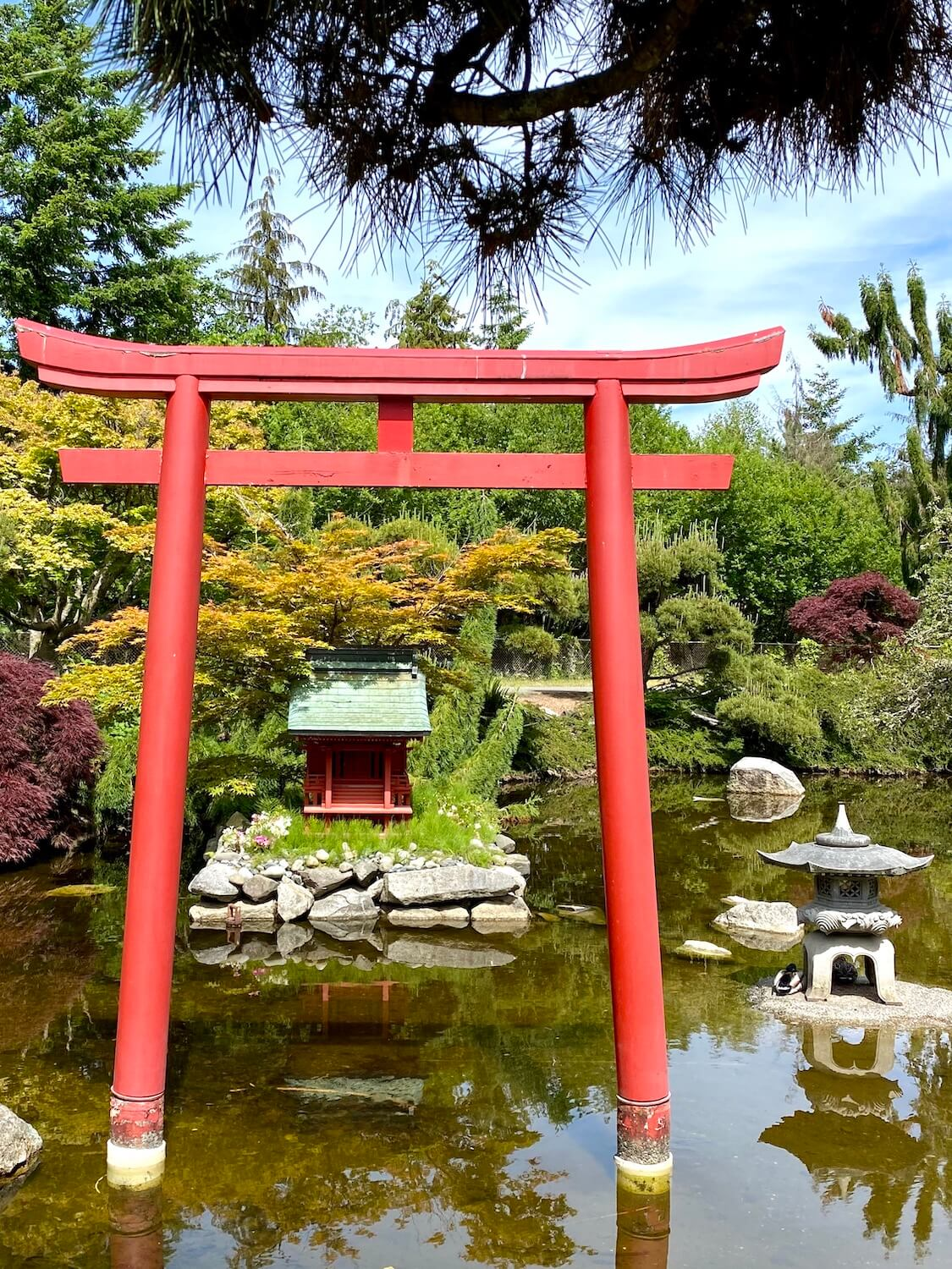 A bright red gate stands in a pond filled with murky brownish water while two ducks hang out next to a stone lantern standing on gravel near the water level.  A little island made of stones holds a tiny red temple with green tile roof.