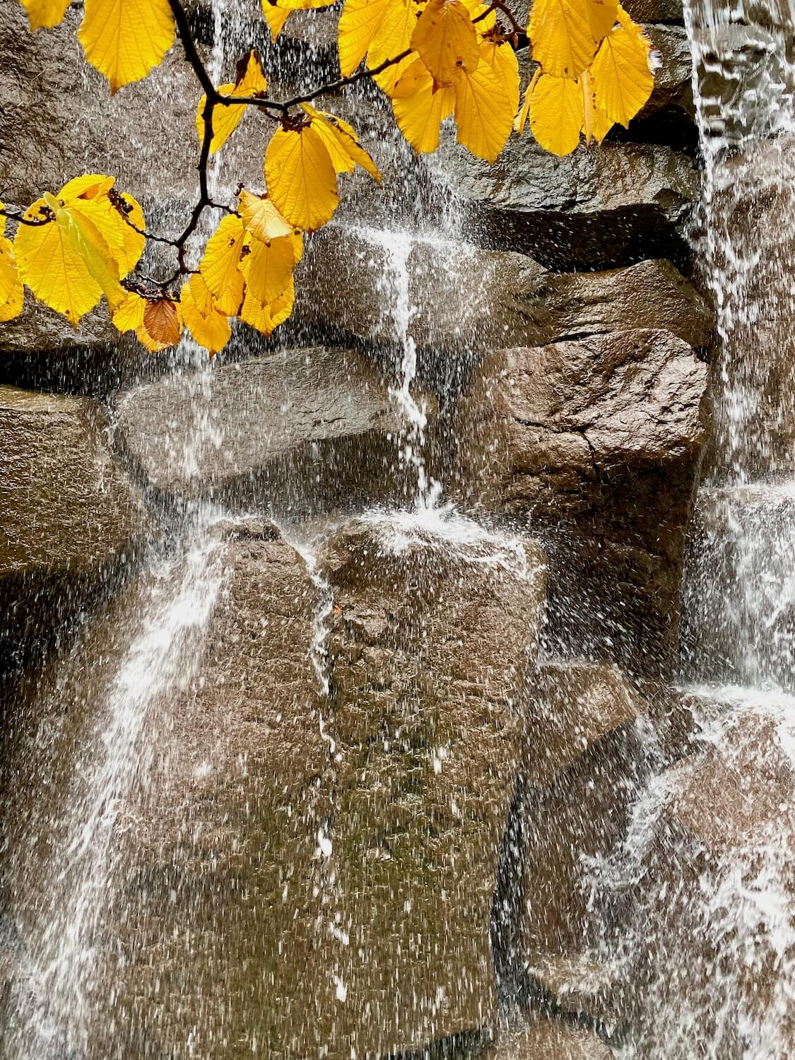Water gushes down a rock wall, and the thousands of droplets splash all over, creating white foam while a branch holding bright yellow leaves waves.