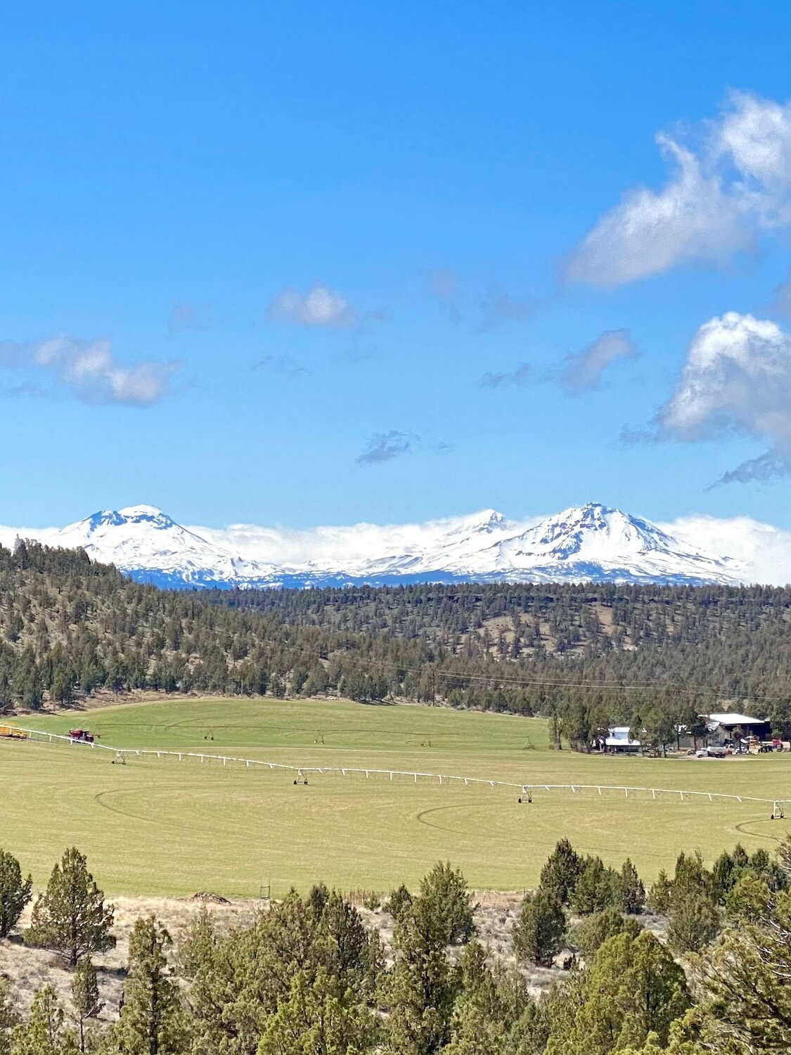 This beautiful landscape scene shows off the stunning beauty of the Three Sisters that rise up above scattered clouds to a bright blue sky.  In the foreground is a green field of crops surrounded by young pine trees.
