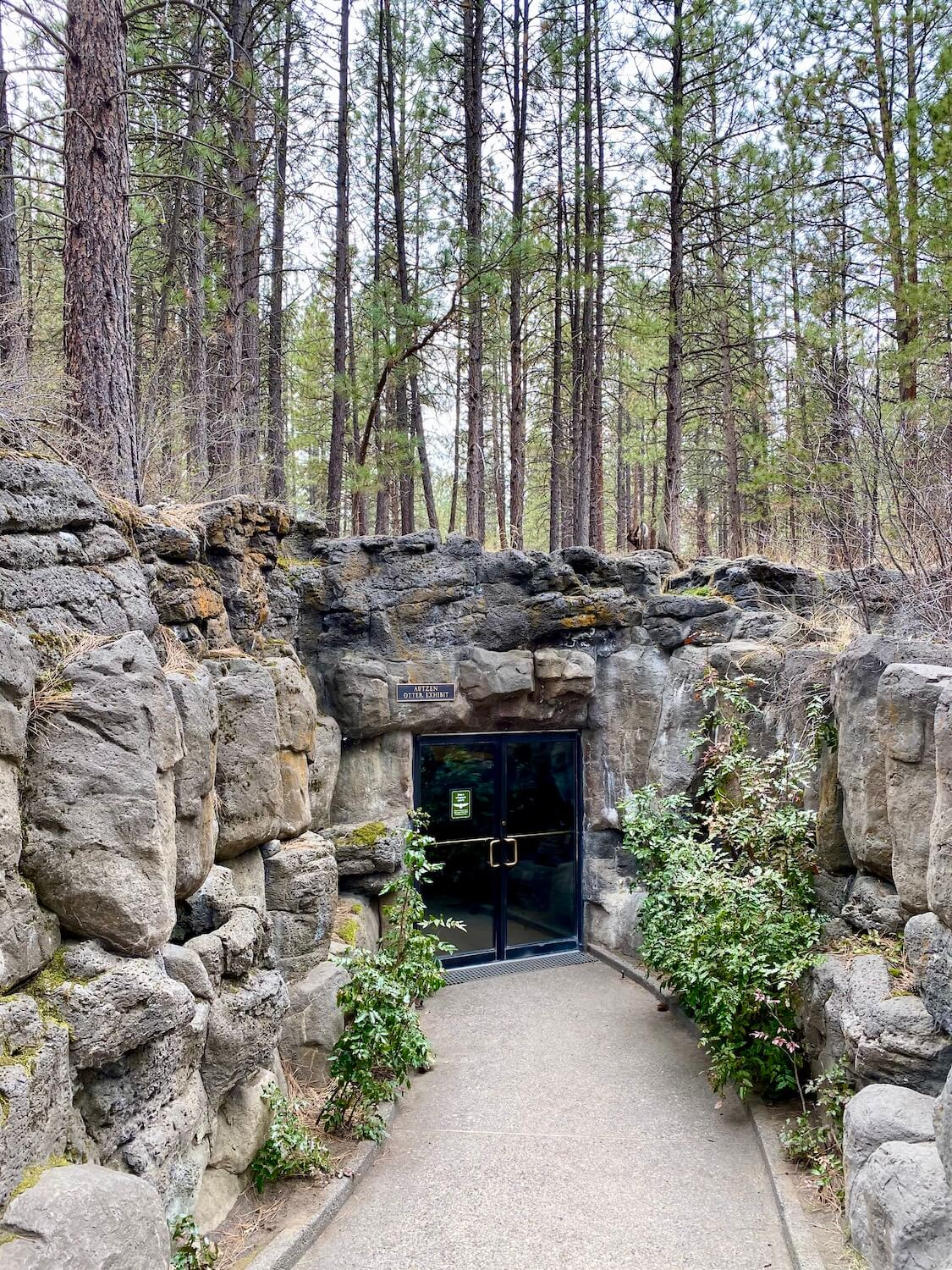 The entrance to the Otter exhibit at the High Desert Museum in Bend, Oregon is buried amongst large boulders set underneath a forest of young ponderosa pine trees.