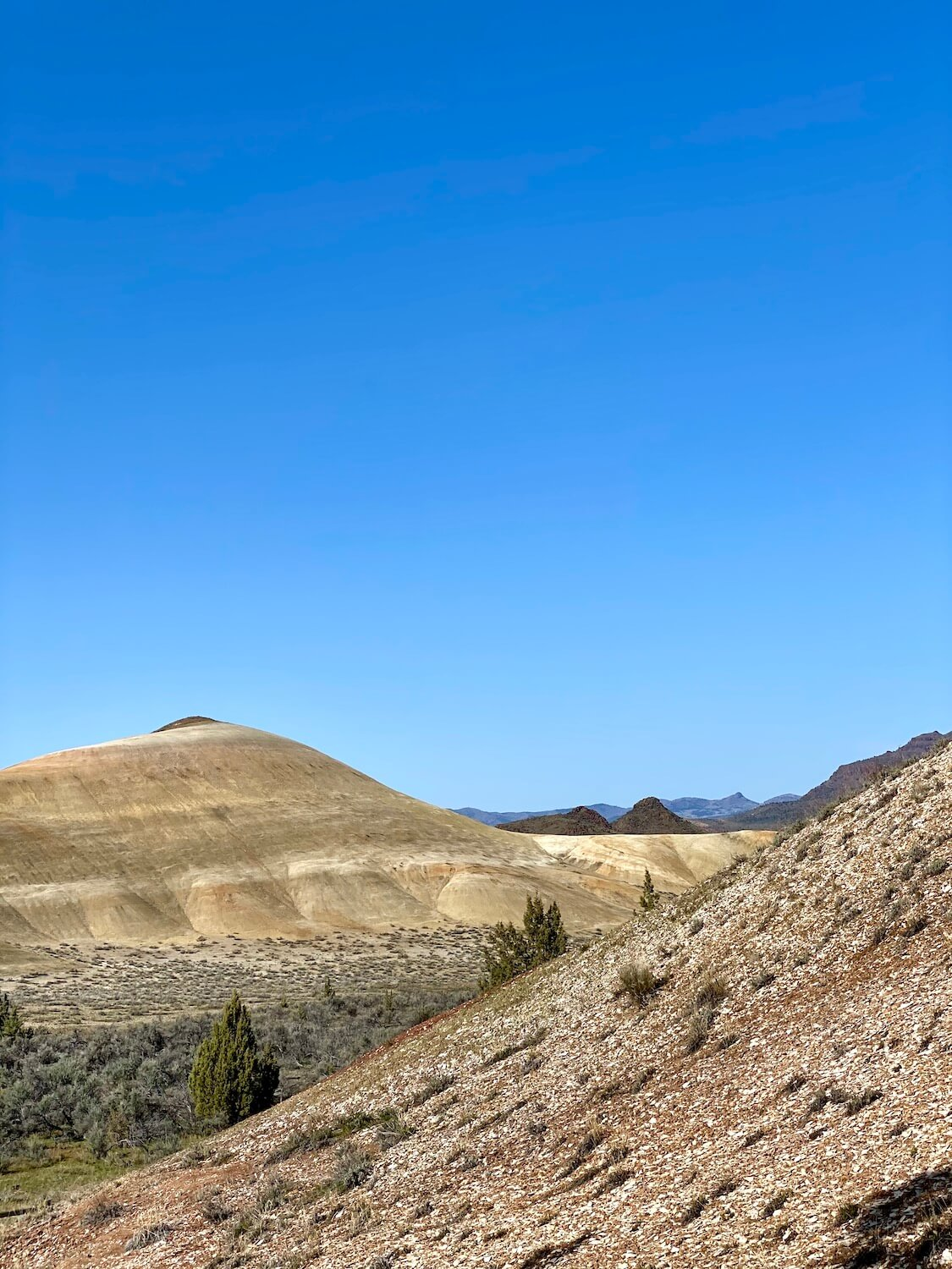 A hill covered with shale pieces has a few small sage plants trying to grow amongst the arid climate at the Painted Hills in Oregon.  A rolling hill that mixes greens and yellows rises up in the distance under a blue sky.