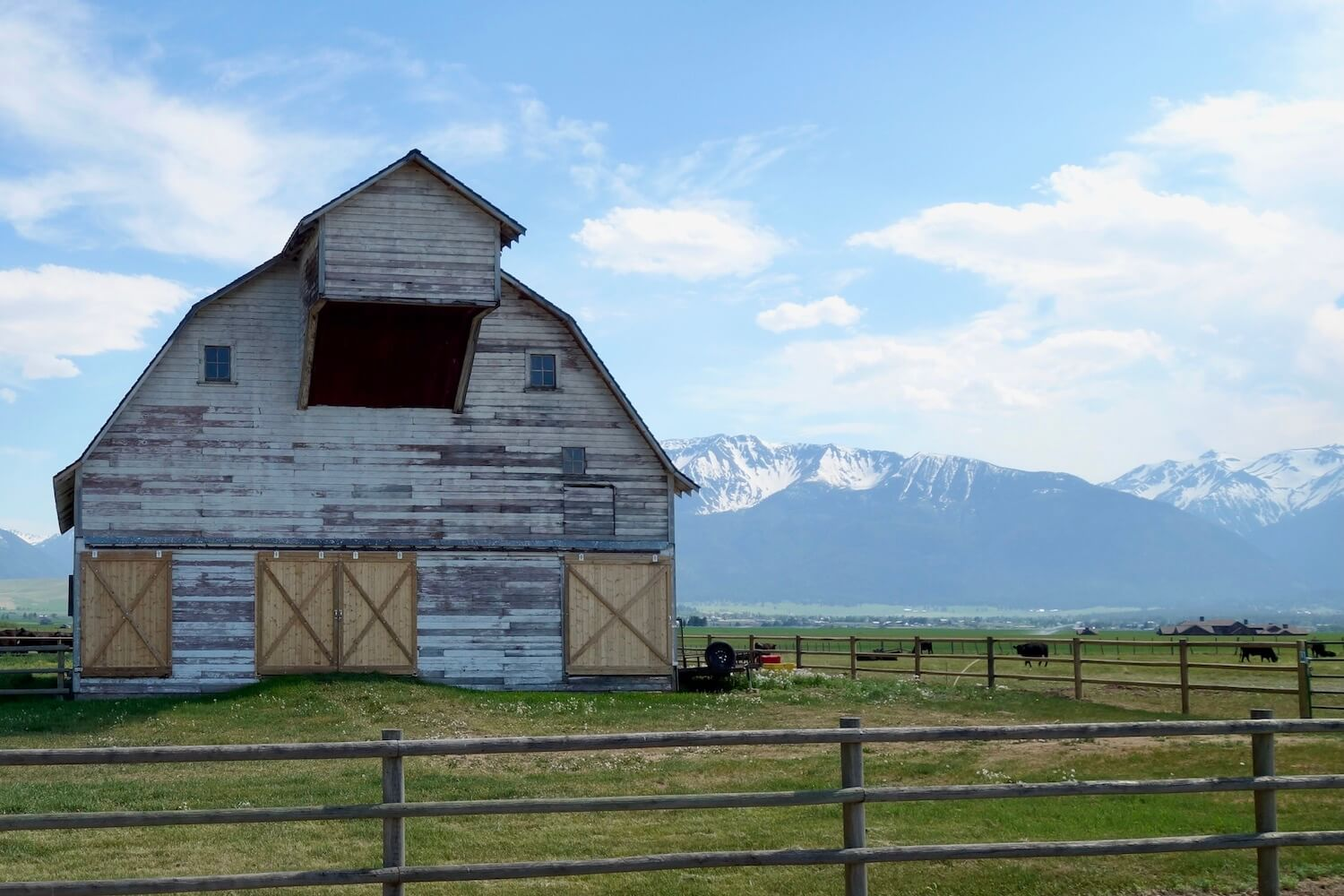 A barn near Joseph, Oregon sits on green grassland just in front of the Wallowa Mountains in Eastern Oregon. There are cattle grazing and wood posts create the fencing.
