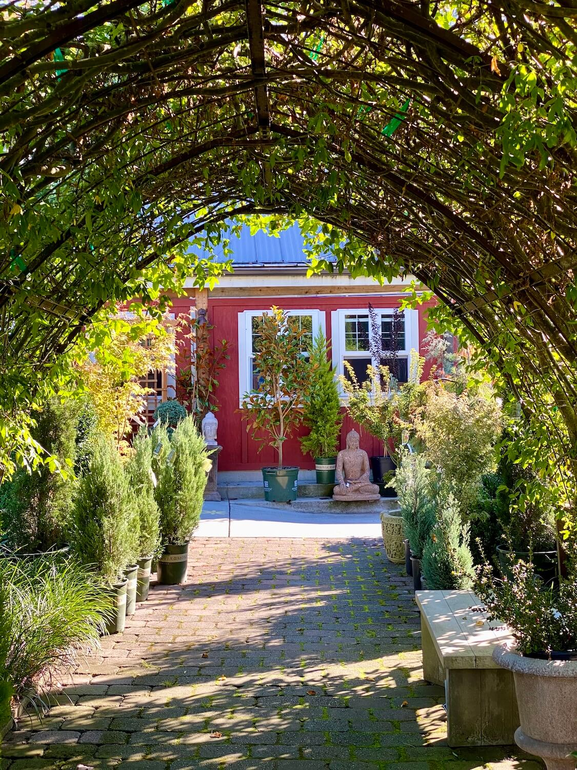 Visiting a nursery is a fun thing to do on Whidbey Island. Here, a red garden shed with white trim around the windows is seen beyond an arbor of vine plants growing in a way that makes a cathedral shaped roof over this brick passageway.