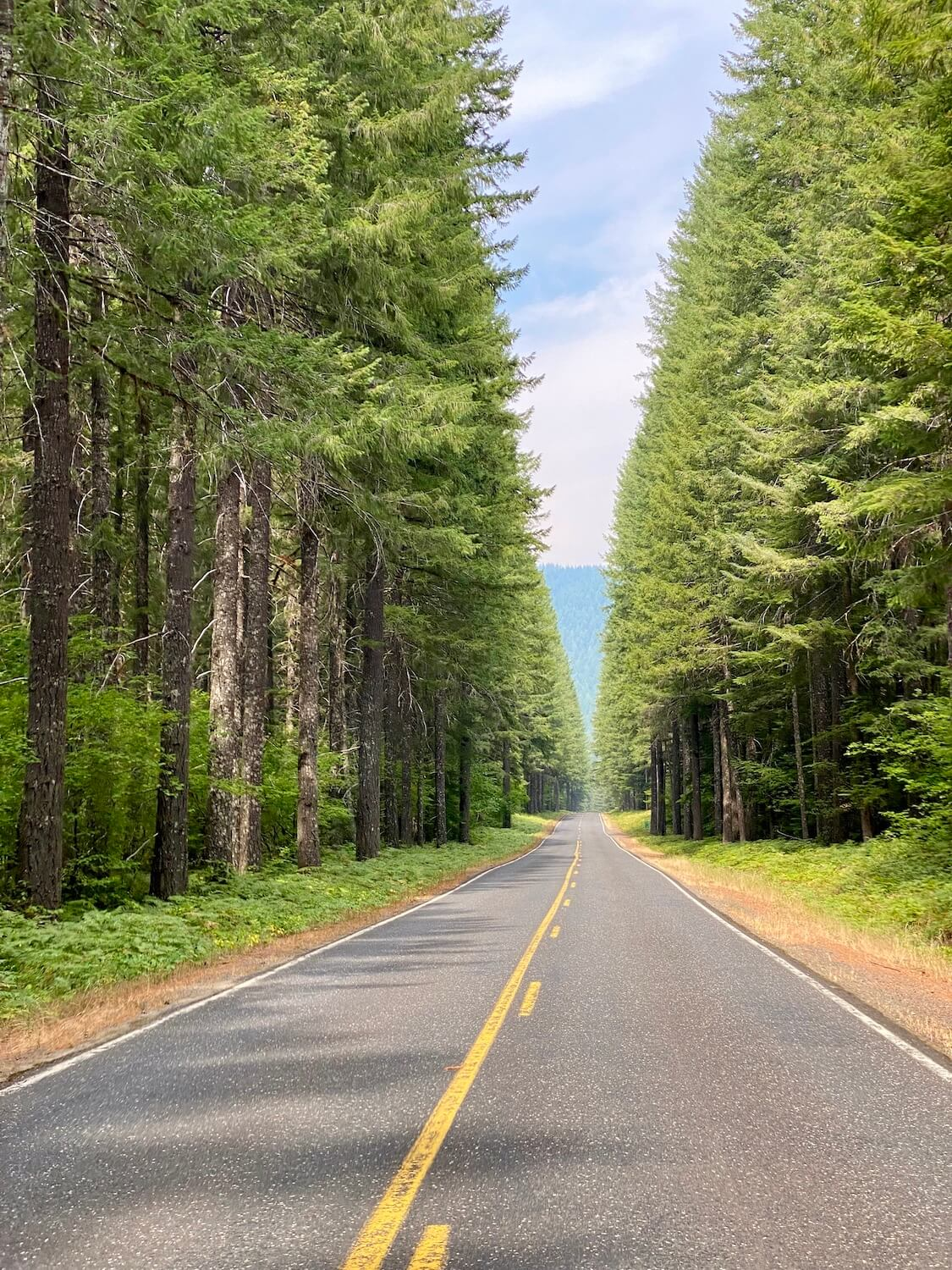 A forested road heads toward more forest with trees on both sides of the road. They are bright green with fir branches and the roadway has a yellow line in the middle.