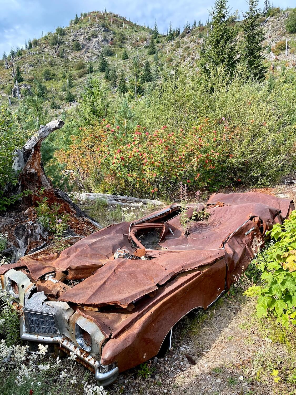 This photo is a 1972 Pontiac Grand Prix that was destroyed in the May 18, 1980 blast of Mount St. Helens. The car is on a hillside with short vegetation and small fir trees. The sky is blue.
