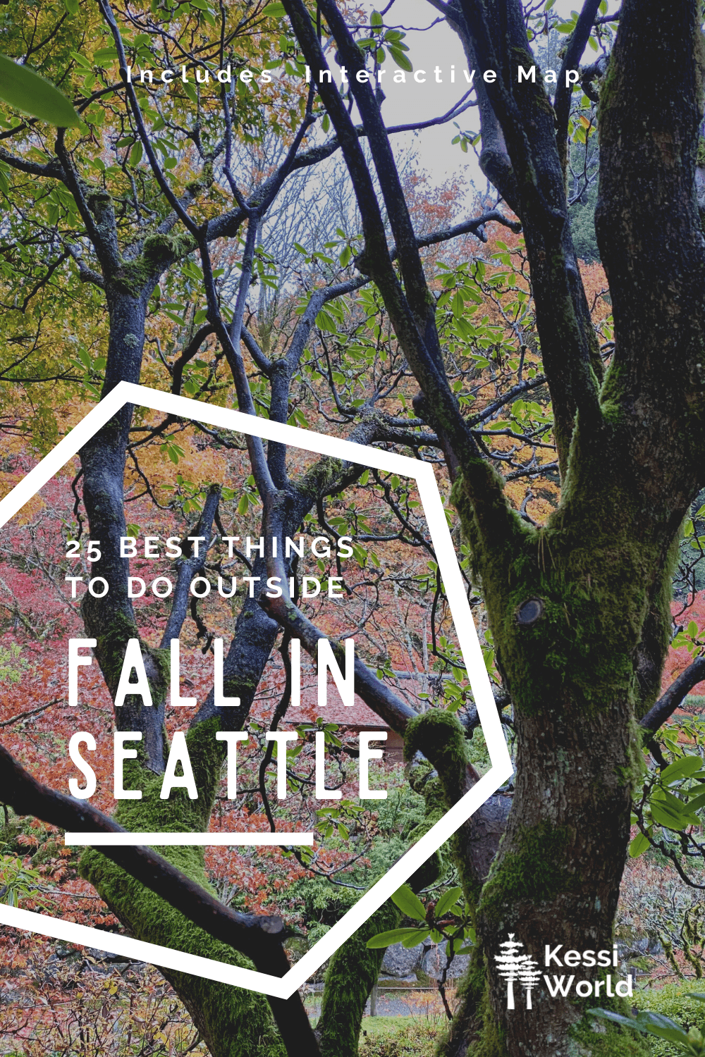 """This Pinterest Pin has the title written in white print that says """"25 of the best things to do outside, Fall in Seattle. The background is a tree losing it's leaves while being surrounded by a variety of fall colors on the trees nearby."""