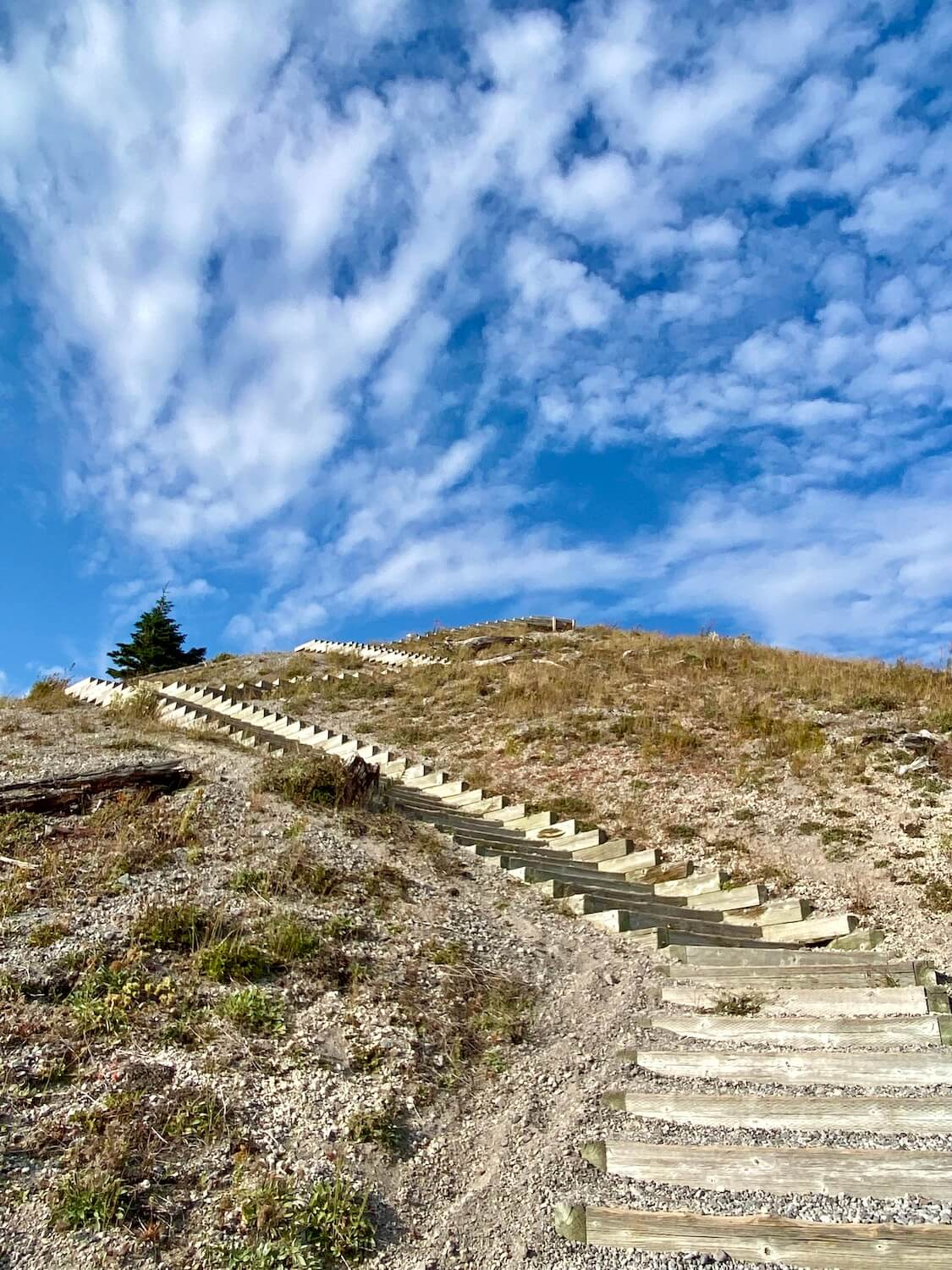 A stairway works up to the top of an ash covered hill on Mount St. Helens.  The sky is bright blue with white fluffy clouds and a small fir tree at the top.