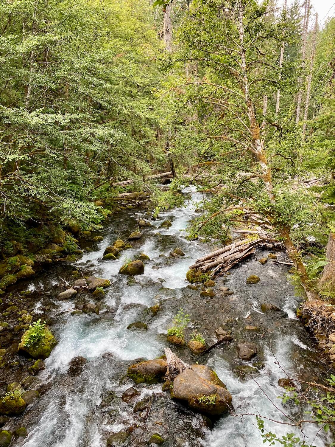 A flowing creek works its way through the Lewis River Recreation Area. There are a number of fir and birch trees hanging over the rushing water.