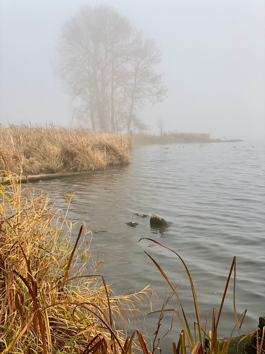 A misty lake scene with dried golden grasses leading up to the waters edge. In the distance through the mist are five deciduous trees clumped together.